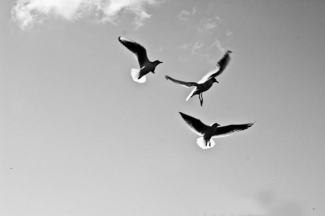Bauchatmung_birds